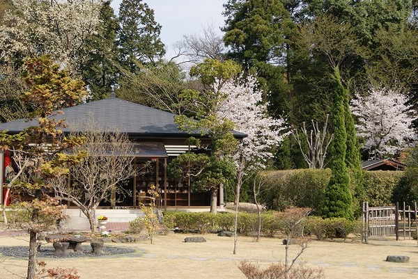 桜の開花3(2011年)