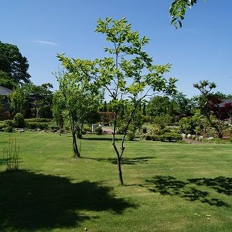 夏の庭園2