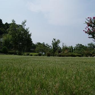 芝刈りをしました