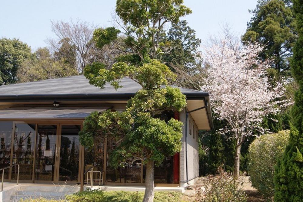 霊園内の桜2(2012年)
