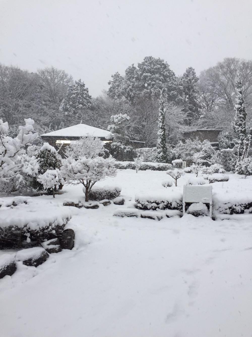 初雪【2018年1月】