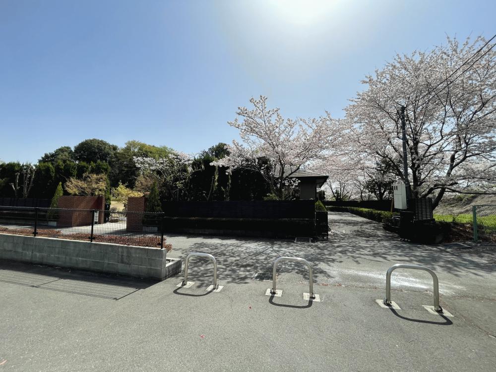 桜(2021年)